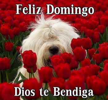 feliz y bendecido domingo dios